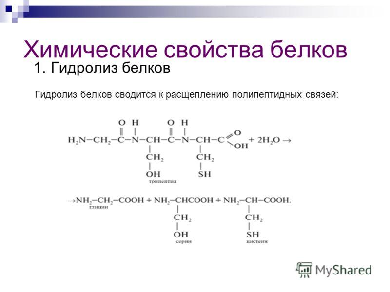 Химические свойства белков 1. Гидролиз белков Гидролиз белков сводится к расщеплению полипептидных связей: