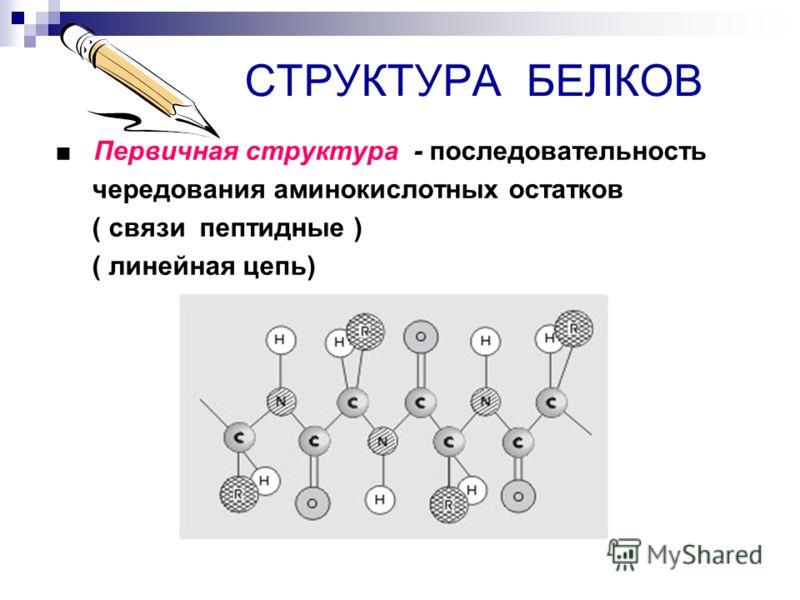 СТРУКТУРА БЕЛКОВ Первичная структура - последовательность чередования аминокислотных остатков ( связи пептидные ) ( линейная цепь)