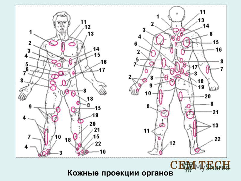 Кожные проекции органов CEM TECH