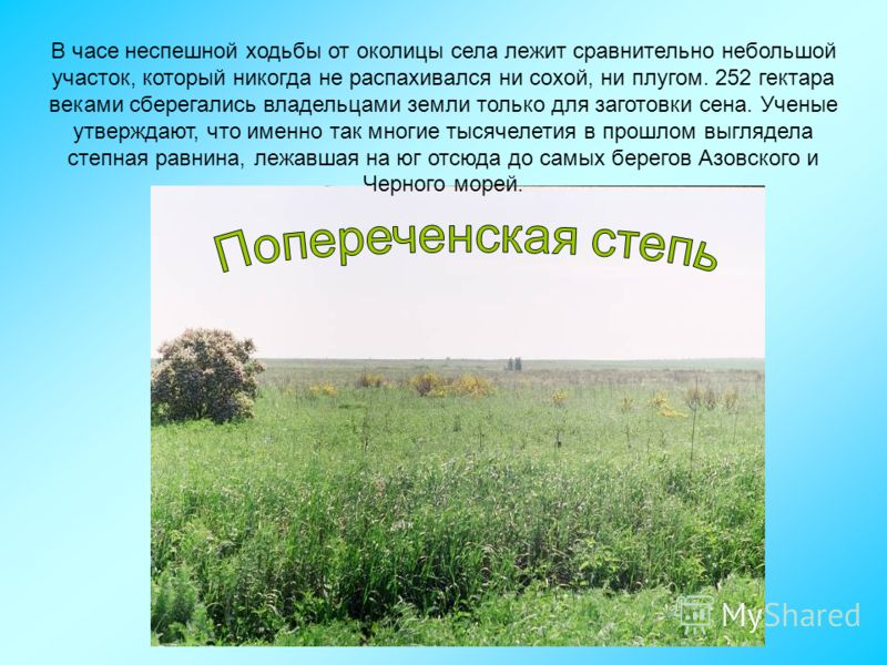 В часе неспешной ходьбы от околицы села лежит сравнительно небольшой участок, который никогда не распахивался ни сохой, ни плугом. 252 гектара веками сберегались владельцами земли только для заготовки сена. Ученые утверждают, что именно так многие ты