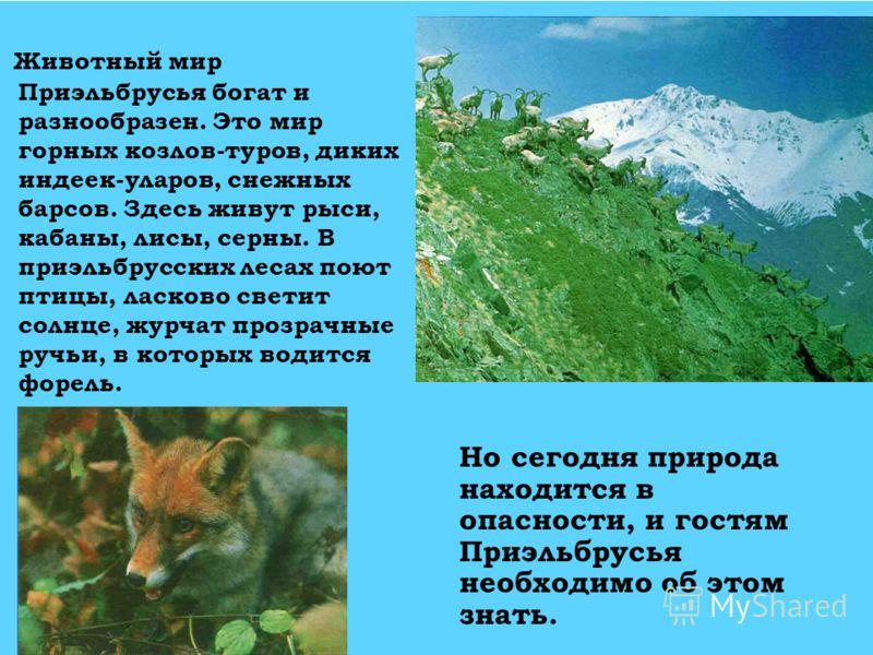 Животный мир Приэльбрусья богат и разнообразен. Это мир горных козлов-туров, диких индеек-уларов, снежных барсов. Здесь живут рыси, кабаны, лисы, серны. В приэльбрусских лесах поют птицы, ласково светит солнце, журчат прозрачные ручьи, в которых води