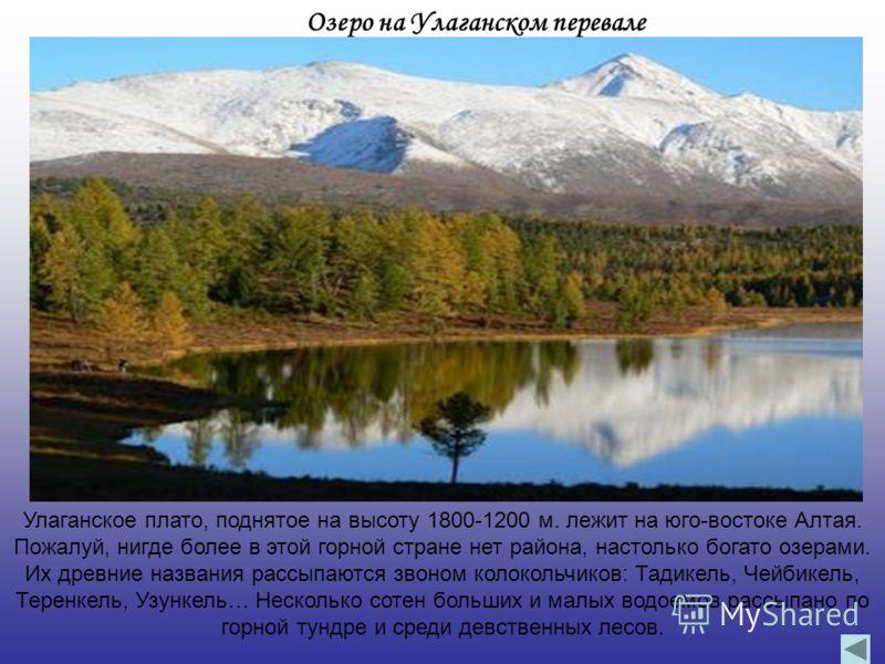 Озеро на Улаганском перевале Улаганское плато, поднятое на высоту 1800-1200 м. лежит на юго-востоке Алтая. Пожалуй, нигде более в этой горной стране нет района, настолько богато озерами. Их древние названия рассыпаются звоном колокольчиков: Тадикель,