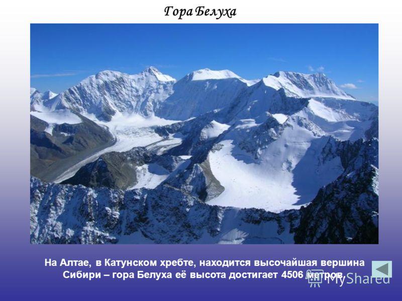 Гора Белуха На Алтае, в Катунском хребте, находится высочайшая вершина Сибири – гора Белуха её высота достигает 4506 метров.