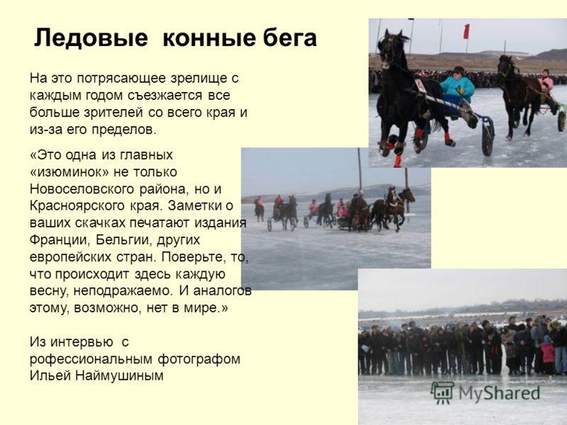 Ледовые конные бега На это потрясающее зрелище с каждым годом съезжается все больше зрителей со всего края и из-за его пределов. «Это одна из главных «изюминок» не только Новоселовского района, но и Красноярского края. Заметки о ваших скачках печатаю