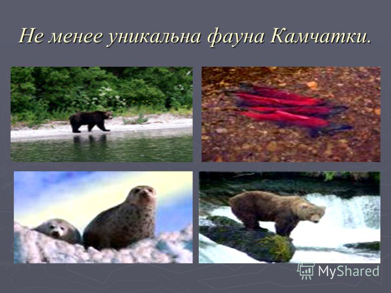 Не менее уникальна фауна Камчатки.