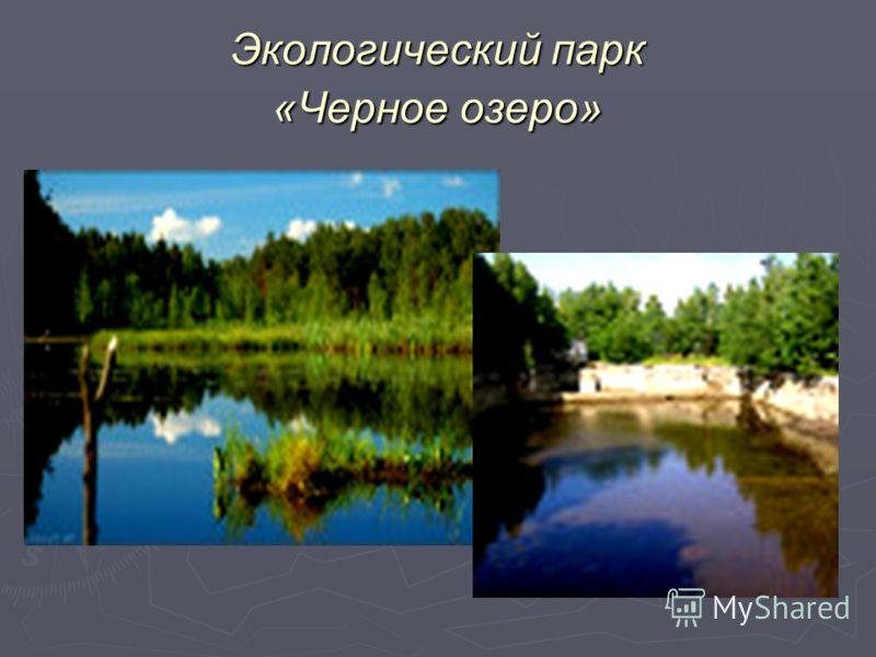Экологический парк «Черное озеро»