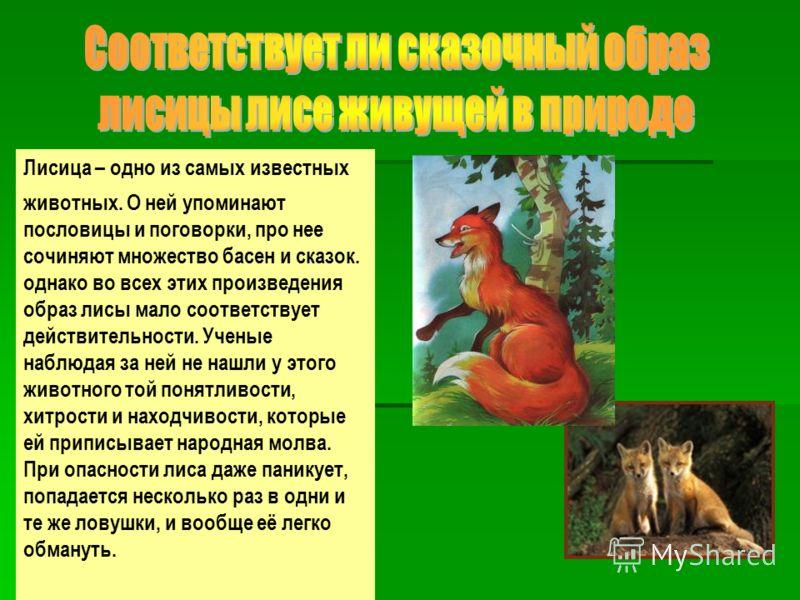 Лисица – одно из самых известных животных. О ней упоминают пословицы и поговорки, про нее сочиняют множество басен и сказок. однако во всех этих произведения образ лисы мало соответствует действительности. Ученые наблюдая за ней не нашли у этого живо