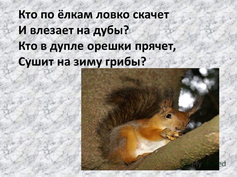 Кто по ёлкам ловко скачет И влезает на дубы? Кто в дупле орешки прячет, Сушит на зиму грибы?