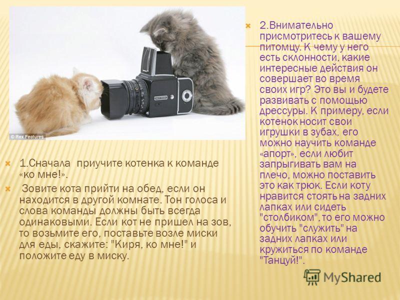 1.Сначала приучите котенка к команде «ко мне!». Зовите кота прийти на обед, если он находится в другой комнате. Тон голоса и слова команды должны быть всегда одинаковыми. Если кот не пришел на зов, то возьмите его, поставьте возле миски для еды, скаж