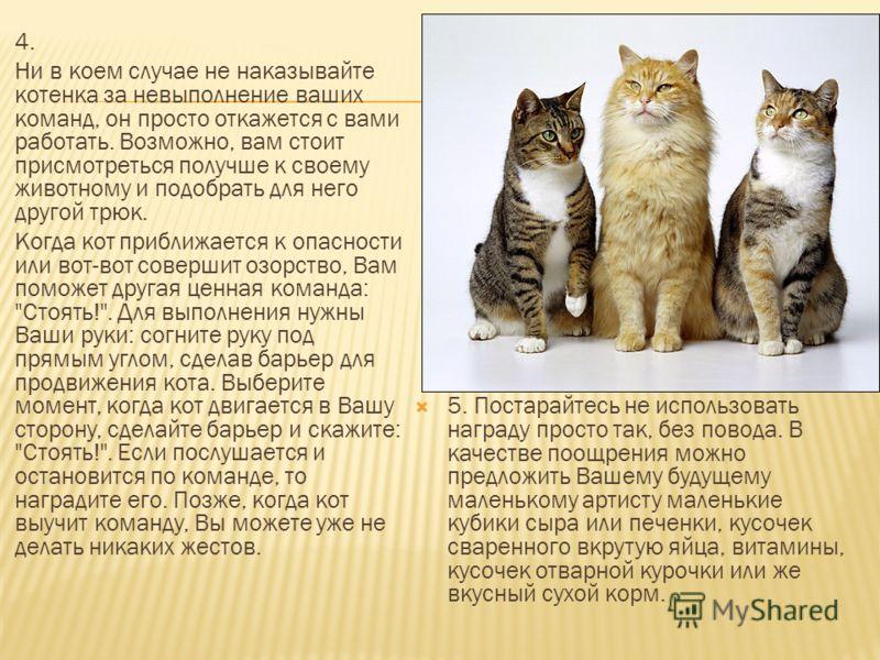 4. Ни в коем случае не наказывайте котенка за невыполнение ваших команд, он просто откажется с вами работать. Возможно, вам стоит присмотреться получше к своему животному и подобрать для него другой трюк. Когда кот приближается к опасности или вот-во