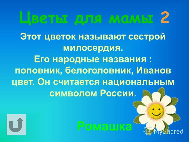 Цветы для мамы 2 Этот цветок называют сестрой милосердия. Его народные названия : поповник, белоголовник, Иванов цвет. Он считается национальным символом России. Ромашка