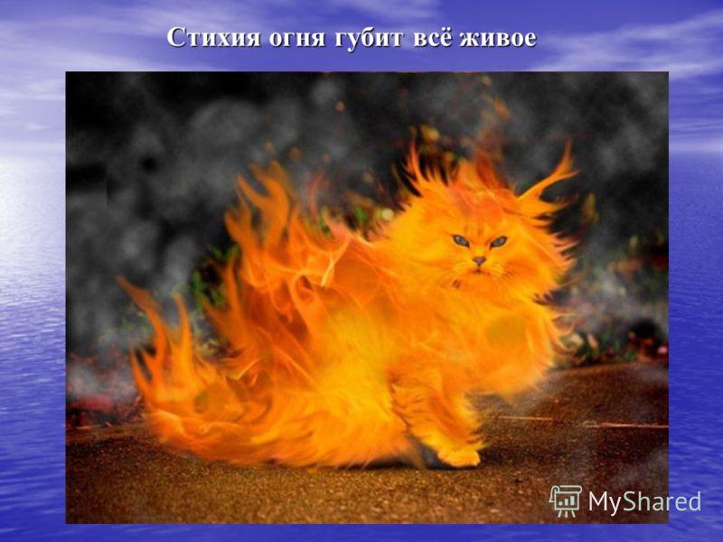 Стихия огня губит всё живое