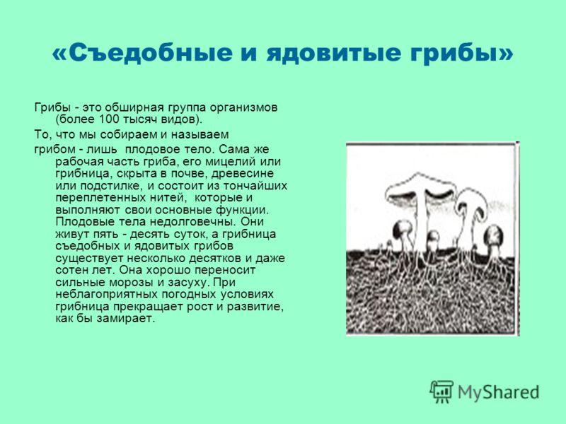 «Съедобные и ядовитые грибы» Грибы - это обширная группа организмов (более 100 тысяч видов). Tо, что мы собираем и называем грибом - лишь плодовое тело. Сама же рабочая часть гриба, его мицелий или грибница, скрыта в почве, древесине или подстилке, и