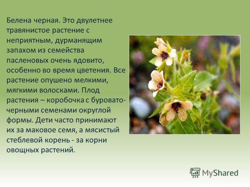 ядовитые растения казахстана