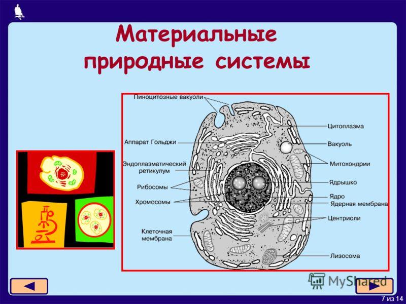 7 из 14 Материальные природные системы