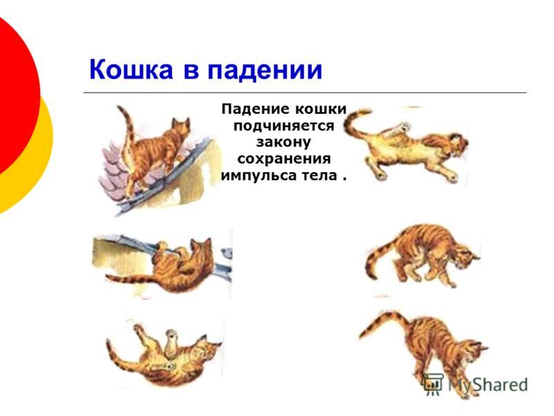 Падение кошки подчиняется закону сохранения импульса тела.