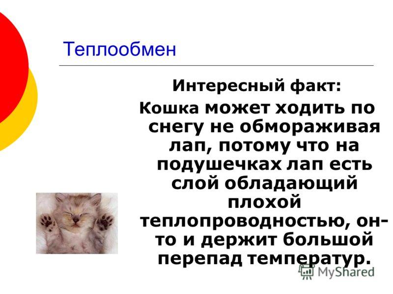 Интересный факт: Кошка может ходить по снегу не обмораживая лап, потому что на подушечках лап есть слой обладающий плохой теплопроводностью, он- то и держит большой перепад температур.
