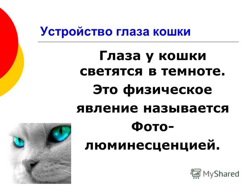 Глаза у кошки светятся в темноте. Это физическое явление называется Фото- люминесценцией.