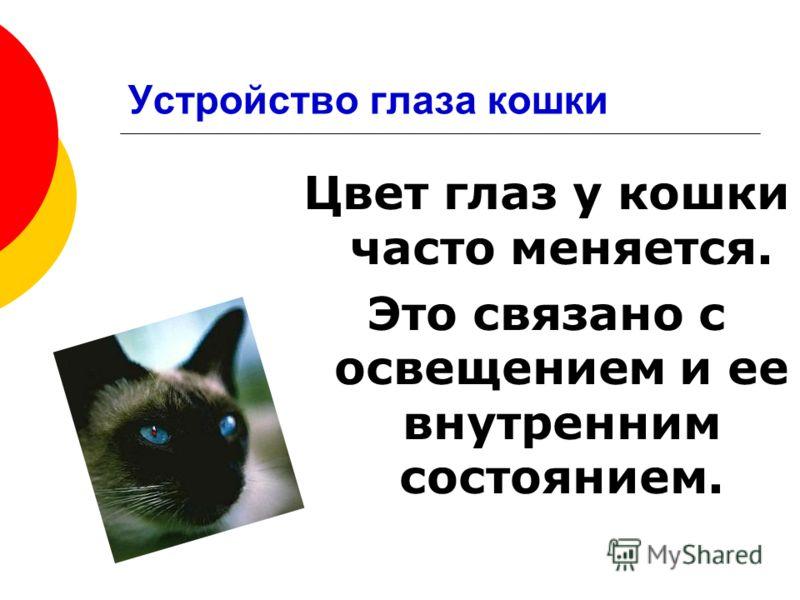 Цвет глаз у кошки часто меняется. Это связано с освещением и ее внутренним состоянием.