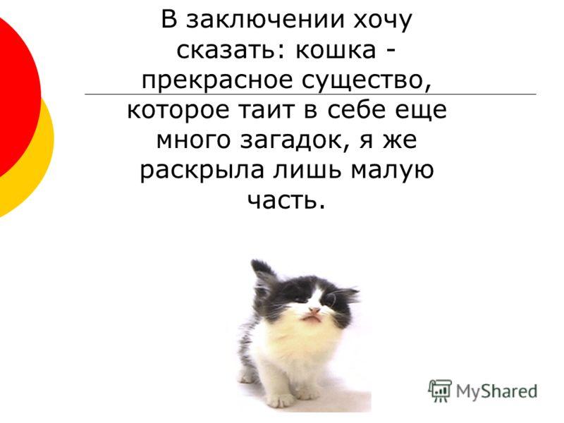 В заключении хочу сказать: кошка - прекрасное существо, которое таит в себе еще много загадок, я же раскрыла лишь малую часть.