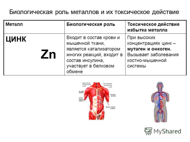 Биологическая роль металлов и их токсическое действие МеталлБиологическая рольТоксическое действие избытка металла ЦИНК Zn Входит в состав крови и мышечной ткани, является катализатором многих реакций, входит в состав инсулина, участвует в белковом о