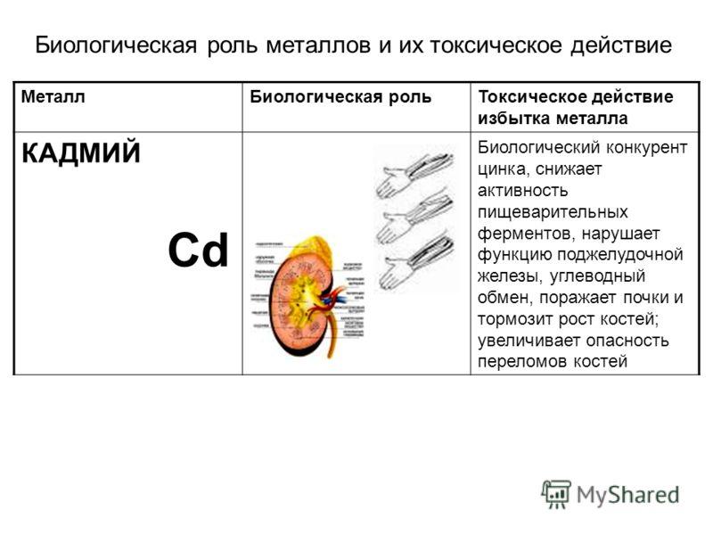 МеталлБиологическая рольТоксическое действие избытка металла КАДМИЙ Cd Биологический конкурент цинка, снижает активность пищеварительных ферментов, нарушает функцию поджелудочной железы, углеводный обмен, поражает почки и тормозит рост костей; увелич