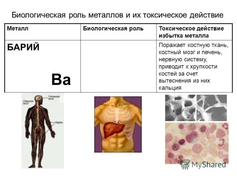 МеталлБиологическая рольТоксическое действие избытка металла БАРИЙ Ba Поражает костную ткань, костный мозг и печень, нервную систему, приводит к хрупкости костей за счет вытеснения из них кальция Биологическая роль металлов и их токсическое действие