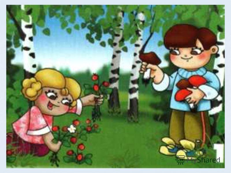 Правила поведения в лесу берюхова