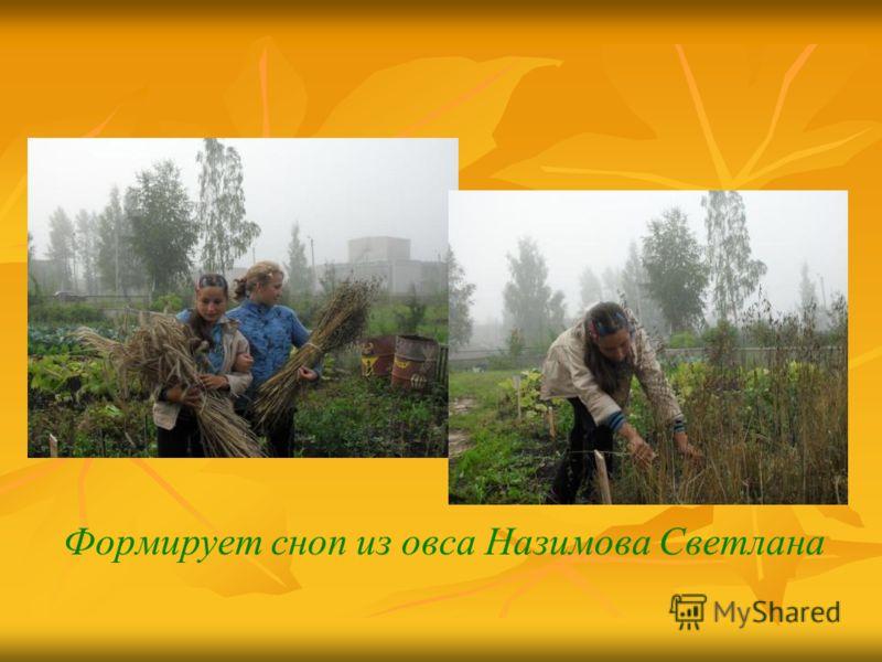 Формирует сноп из овса Назимова Светлана