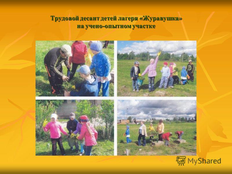 Трудовой десант детей лагеря «Журавушка» на учено-опытном участке