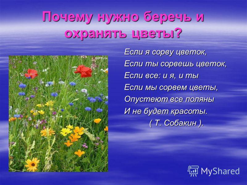 Почему нужно беречь и охранять цветы? Если я сорву цветок, Если ты сорвешь цветок, Если все: и я, и ты Если мы сорвем цветы, Опустеют все поляны И не будет красоты. ( Т. Собакин ). ( Т. Собакин ).