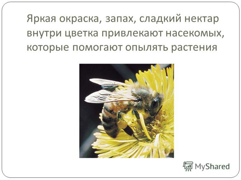 Яркая окраска, запах, сладкий нектар внутри цветка привлекают насекомых, которые помогают опылять растения