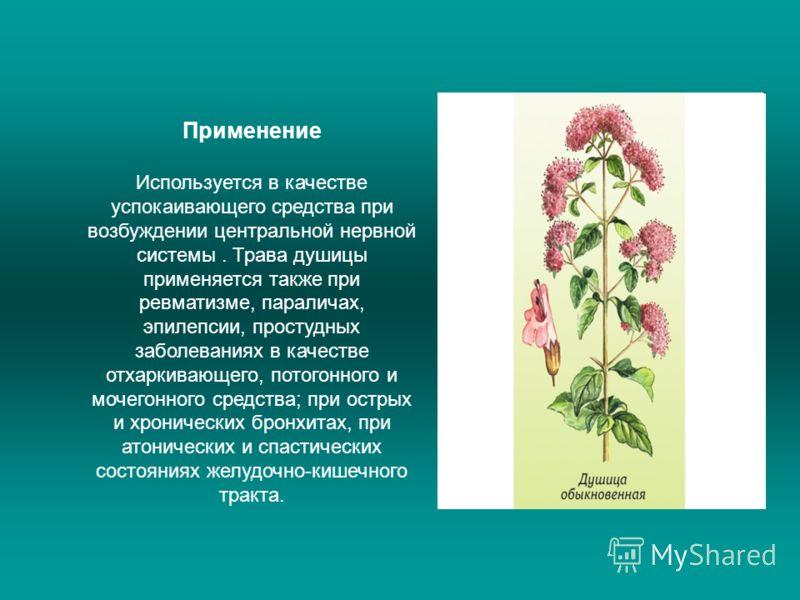 Применение Используется в качестве успокаивающего средства при возбуждении центральной нервной системы. Трава душицы применяется также при ревматизме, параличах, эпилепсии, простудных заболеваниях в качестве отхаркивающего, потогонного и мочегонного