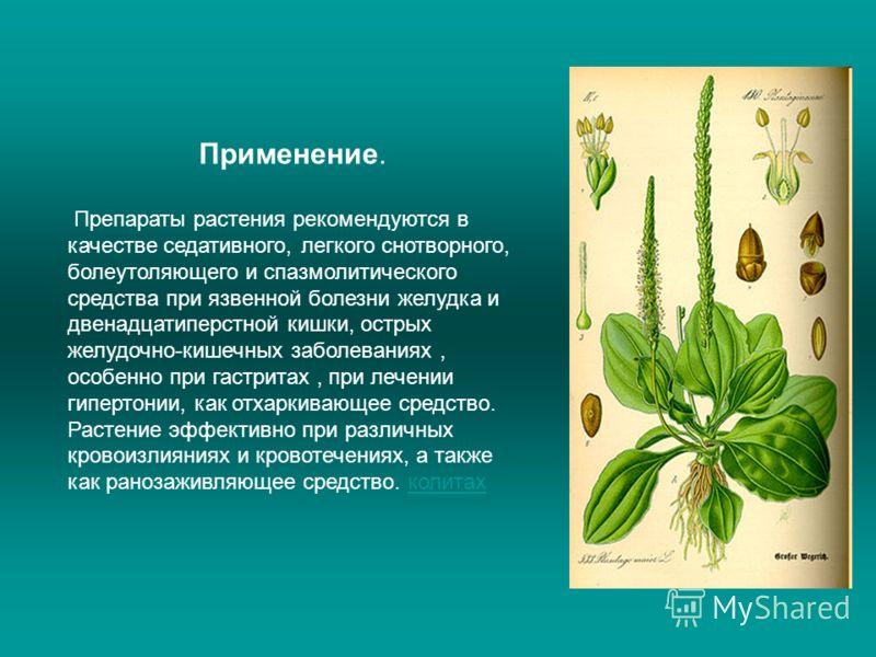 Применение. Препараты растения рекомендуются в качестве седативного, легкого снотворного, болеутоляющего и спазмолитического средства при язвенной болезни желудка и двенадцатиперстной кишки, острых желудочно-кишечных заболеваниях, особенно при гастри
