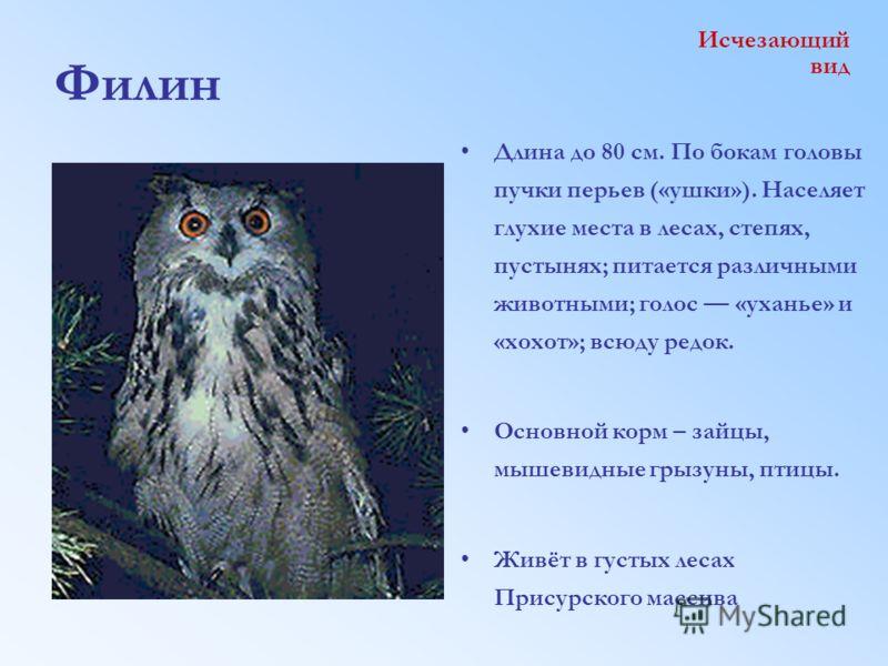 Филин Длина до 80 см. По бокам головы пучки перьев («ушки»). Населяет глухие места в лесах, степях, пустынях; питается различными животными; голос «уханье» и «хохот»; всюду редок. Основной корм – зайцы, мышевидные грызуны, птицы. Живёт в густых лесах