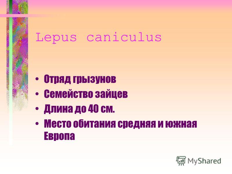 Lepus caniculus Отряд грызунов Семейство зайцев Длина до 40 см. Место обитания средняя и южная Европа