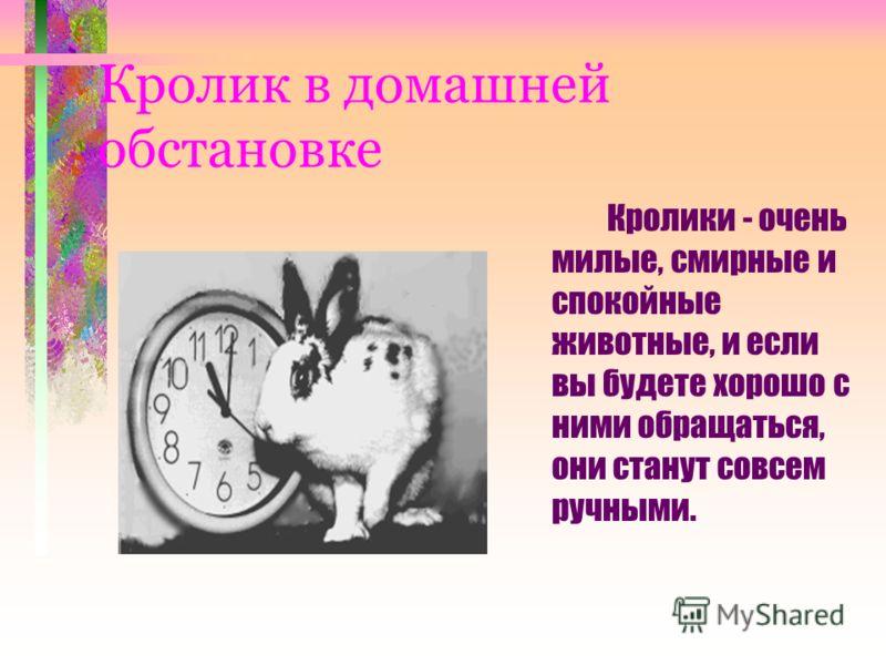 Кролик в домашней обстановке Кролики - очень милые, смирные и спокойные животные, и если вы будете хорошо с ними обращаться, они станут совсем ручными.