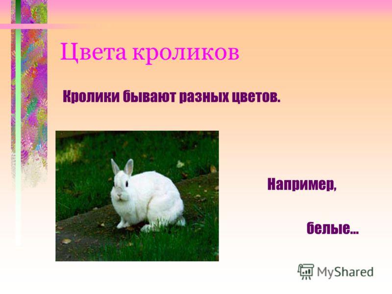 Цвета кроликов Кролики бывают разных цветов. Например, белые...