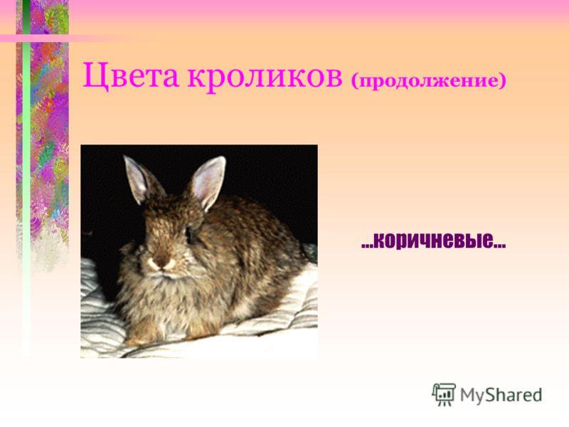Цвета кроликов (продолжение) …коричневые...