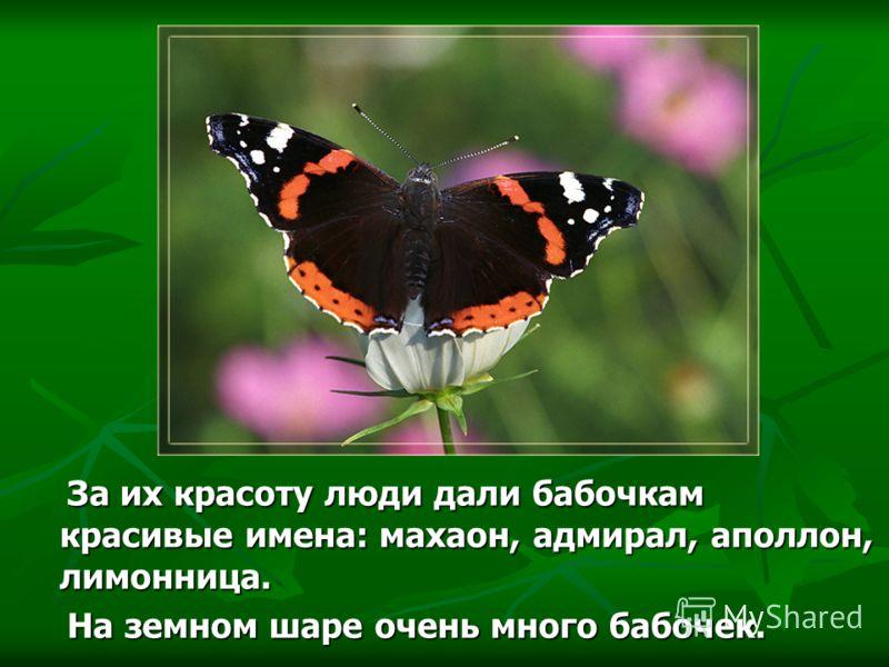 За их красоту люди дали бабочкам красивые имена: махаон, адмирал, аполлон, лимонница. За их красоту люди дали бабочкам красивые имена: махаон, адмирал, аполлон, лимонница. На земном шаре очень много бабочек. На земном шаре очень много бабочек.