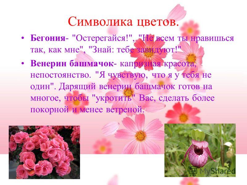 Символика цветов. Бегония-