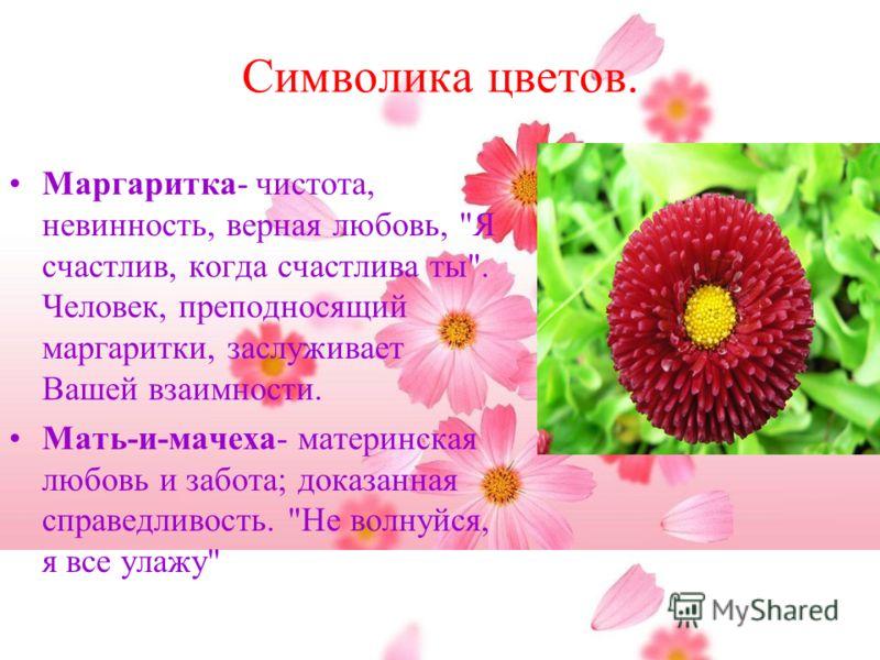 Символика цветов. Маргаритка- чистота, невинность, верная любовь,