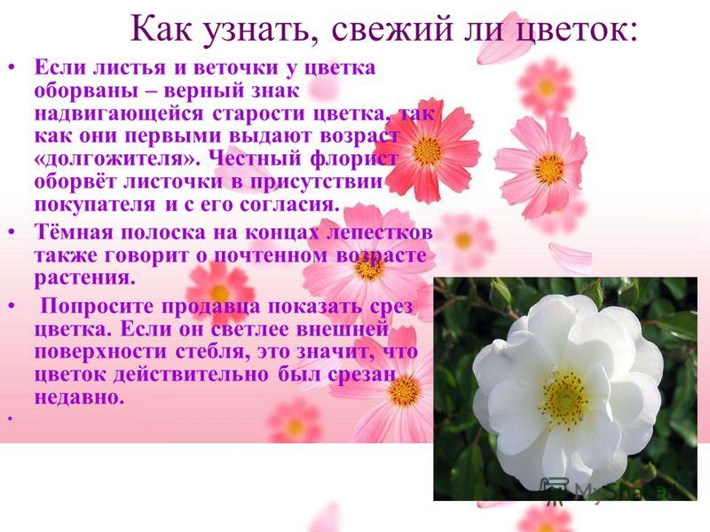 Как узнать, свежий ли цветок: Если листья и веточки у цветка оборваны – верный знак надвигающейся старости цветка, так как они первыми выдают возраст «долгожителя». Честный флорист оборвёт листочки в присутствии покупателя и с его согласия. Тёмная по