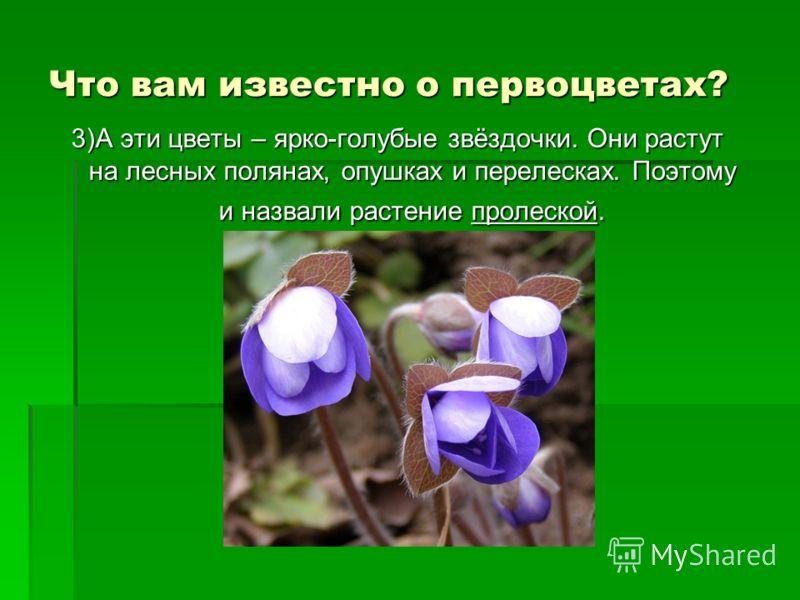 Что вам известно о первоцветах? 3)А эти цветы – ярко-голубые звёздочки. Они растут на лесных полянах, опушках и перелесках. Поэтому и назвали растение пролеской.
