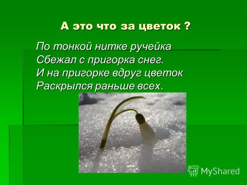 А это что за цветок ? По тонкой нитке ручейка Сбежал с пригорка снег. И на пригорке вдруг цветок Раскрылся раньше всех. По тонкой нитке ручейка Сбежал с пригорка снег. И на пригорке вдруг цветок Раскрылся раньше всех.