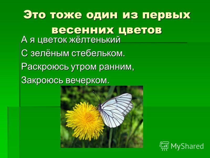 Это тоже один из первых весенних цветов А я цветок жёлтенький С зелёным стебельком. Раскроюсь утром ранним, Закроюсь вечерком.