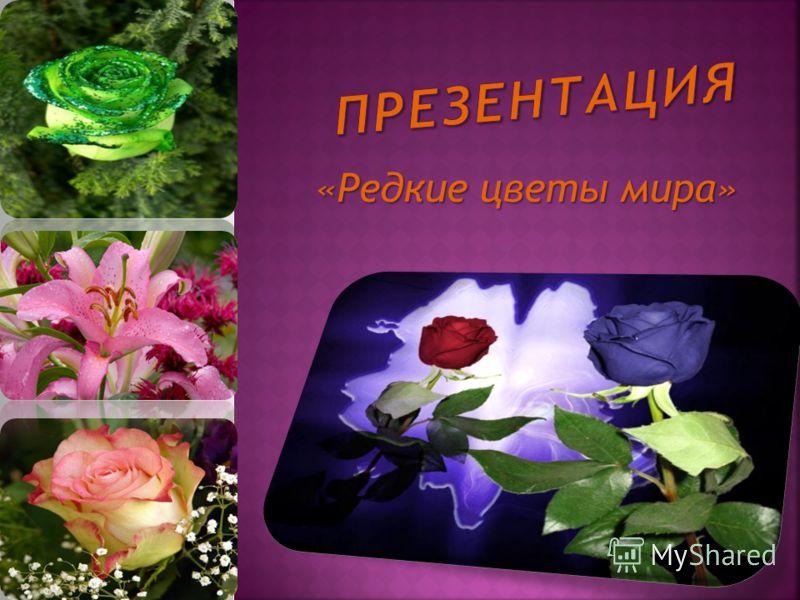 «Редкие цветы мира»