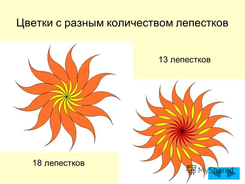 Цветки с разным количеством лепестков 13 лепестков 18 лепестков