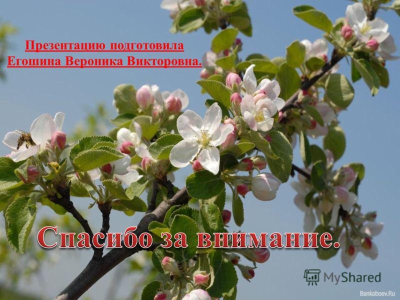 Презентацию подготовила Егошина Вероника Викторовна.
