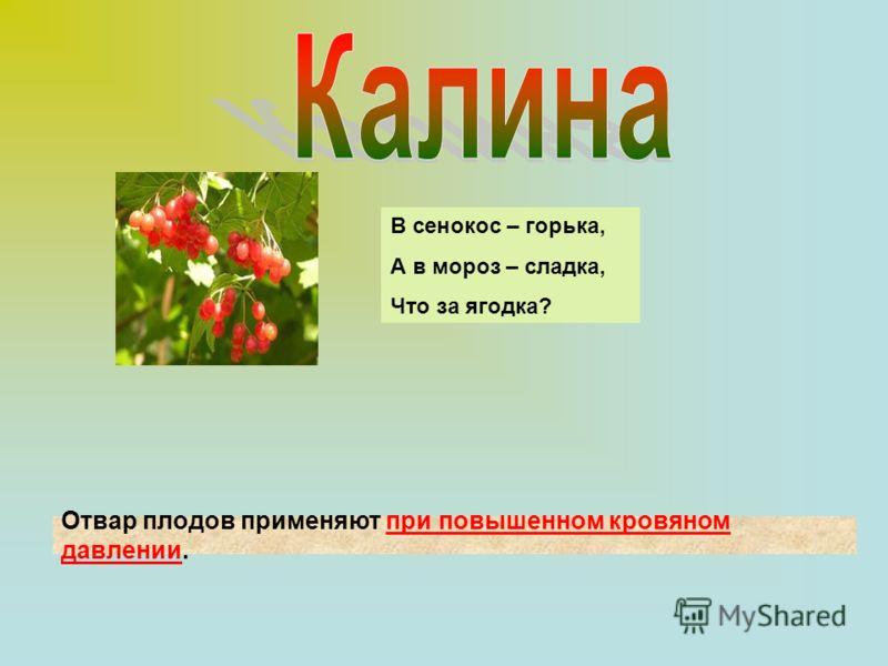 Отвар плодов применяют при повышенном кровяном давлении. В сенокос – горька, А в мороз – сладка, Что за ягодка?